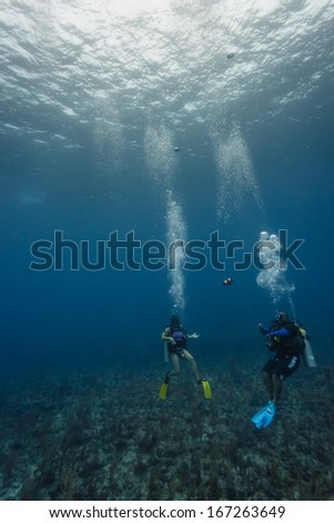 HOL CHAN MARINE RESERVE, BELIZE - DECEMBER 2: Two scuba divers explore coral reef on December 2, 2013 in Hol Chan Marine Reserve, Belize