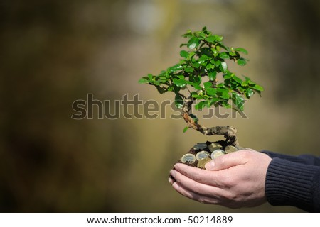 Holding a money tree in the palm of your hand. - stock photo