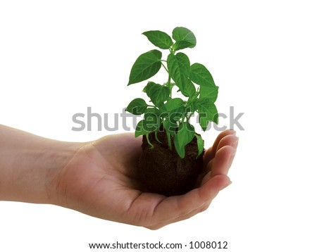 Holding a new plant - stock photo