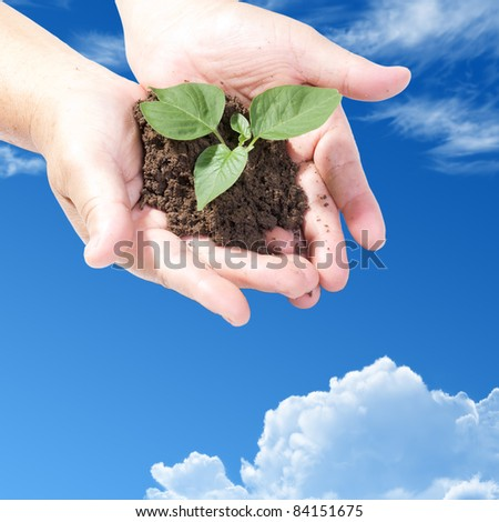 holding a small plant on blue sky - stock photo
