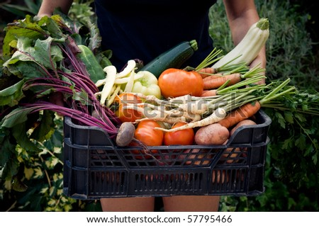 Holding crate with fresh vegetables - stock photo