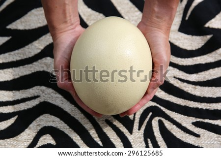 Holding Ostrich Egg - stock photo