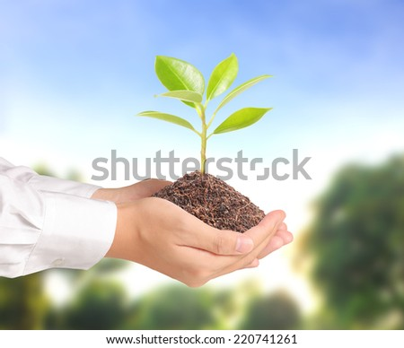 Holding small tree, plant in the hand