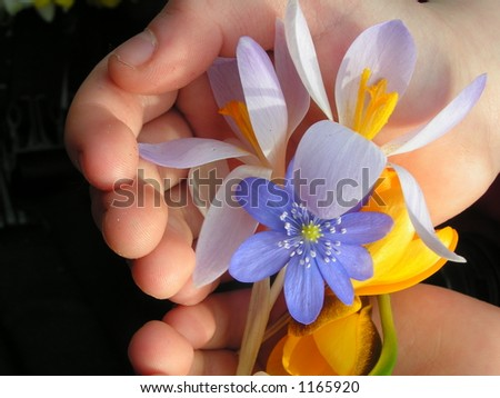 Holding spring flowers - stock photo
