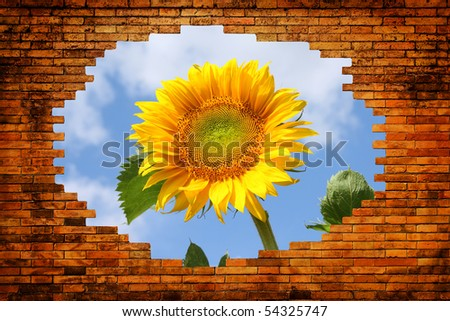 Hole in old brick wall with view on field with sunflower and blue sky - stock photo