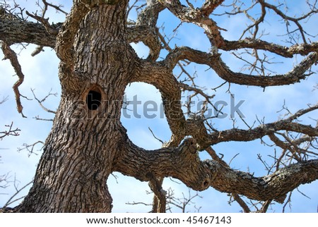 Hole In Tree Trunk - stock photo