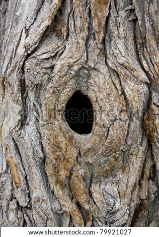 Hole in Tree trunk (Bird nest) - stock photo