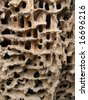 Holes in the wood made by bark beetles - stock photo