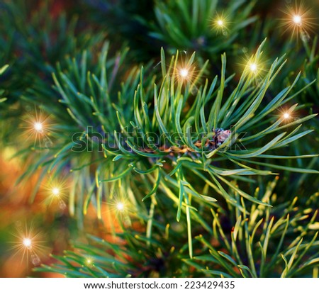 Holiday background. Beautiful green Christmas background. Christmas tree needles. Evergreen. - stock photo