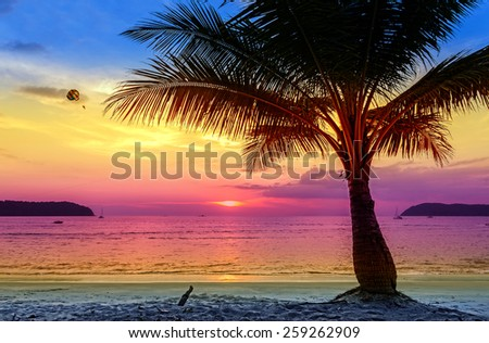 Holiday background made of palm trees silhouettes at sunset. - stock photo