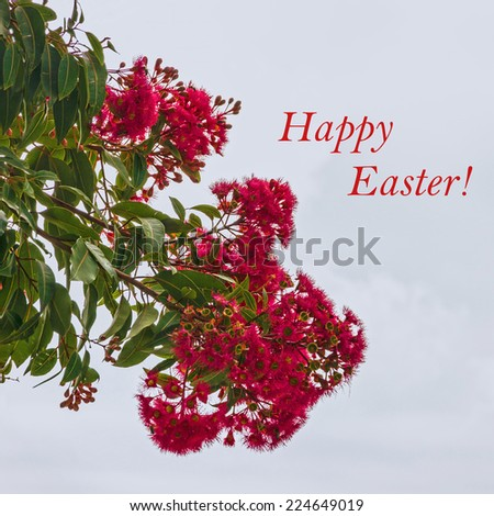 Holiday background - red acacia flowers and sign Happy Easter. Greeting card - stock photo