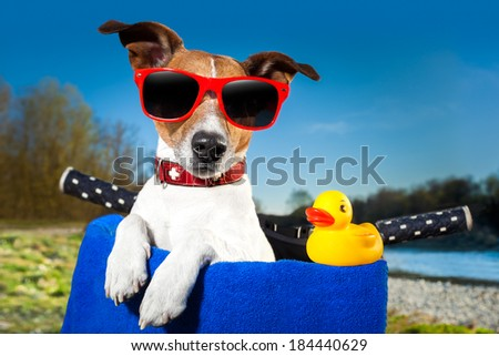 holiday dog on a bike basket and his yellow sweet duck - stock photo