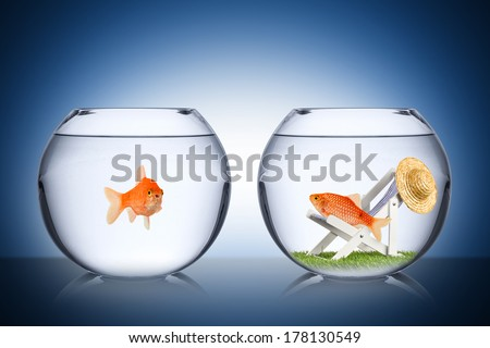 holiday fish concept  - stock photo