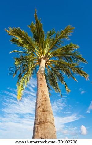 Holiday Paradise - stock photo