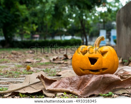 Holiday pumpkins and decorations. Pumpkin on autumn street. pumpkin on dirty wall background.