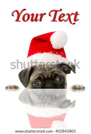 Holiday Theme Pug in a Santa Hat on a White Background