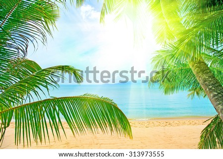 Holidays Background. Beautiful tropical beach with palm tree and sand - stock photo