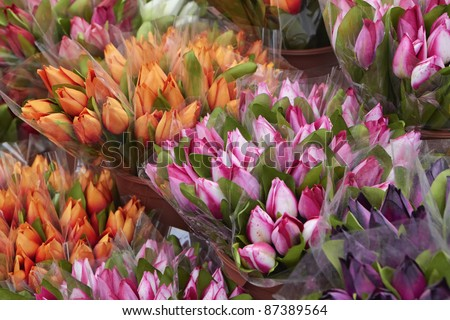 Holland, Amsterdam, Flowers Market, dutch tulips for sale