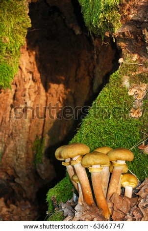 hollow mushrooms - stock photo