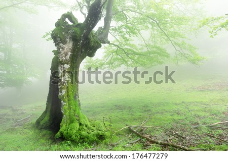 hollow tree in magic forest - stock photo