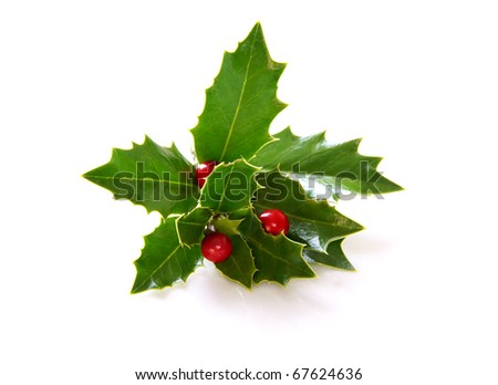 Holly - stock photo