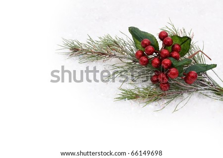 Holly and berries with a snow background, holly and berries background