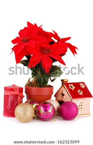 Holly berry flowers and Christmas decoration isolated on white background.