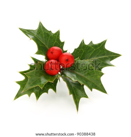 holly berry sprig, christmas symbol - stock photo