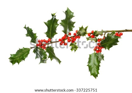 Holly bough laden with red berries isolated against white - stock photo