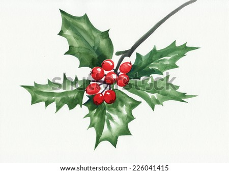 Holly branch watercolor painting isolated on white. Symbol of Christmas and new year. - stock photo