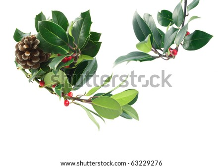Holly branches  with red berries