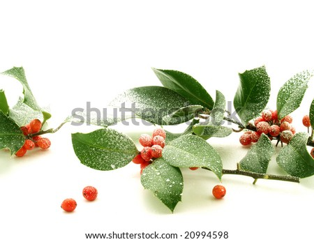 Holly branches with red berries and snow - stock photo
