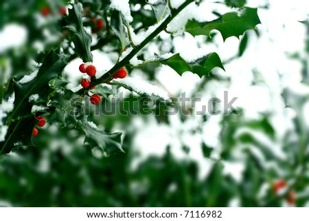 Holly bush with red berries covered in snow - stock photo