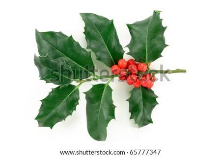 Holly (Ilex aquifolium) isolated on white - stock photo