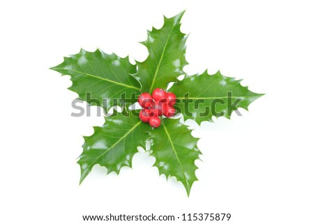 Holly (Ilex) Christmas decoration with red berries isolated on white - stock photo
