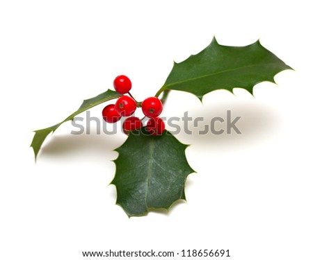 Holly leaf sprig with red berries, isolated over white background