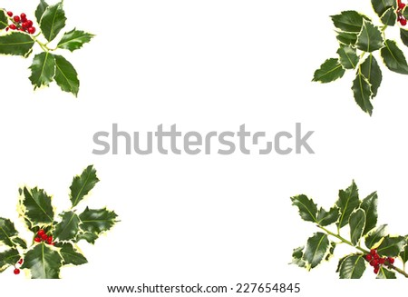 Holly leaf sprigs with red berries forming an abstract border over white background.  - stock photo