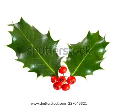 holly leaves and berries isolated on a white background  - stock photo