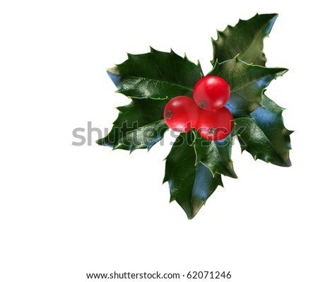 Holly leaves and berries isolated on white background - stock photo