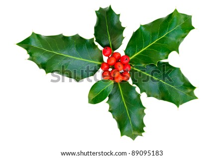 Holly leaves with berries on a white background. Isolated. - stock photo