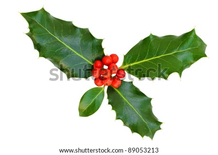 Holly leaves with red berries on a white background, isolated. - stock photo