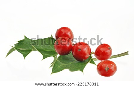 holly, red berries, isolated, - stock photo