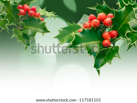 Holly Sprigs with diffused lights - stock photo