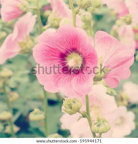 Hollyhock flower old vintage retro style - stock photo
