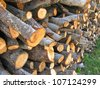 Holm oak wood for the fire place - stock photo