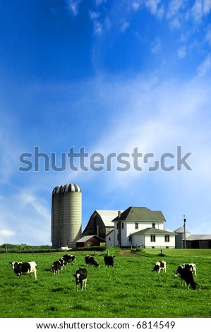 Holstein cows in green pasture under blue sky - stock photo