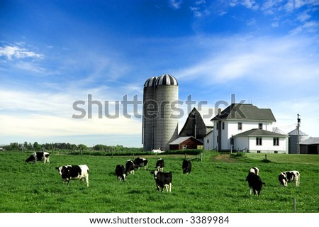 Holstein cows in pasture on farm under blue sky - stock photo