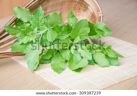 Holy basil leaves SACRED BASIL Holy Basil  The Oriental herb  preparation cooking food ingredients, spices, herbs aromatic herbs for relaxation harvested from the garden - stock photo
