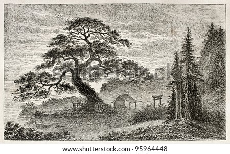 Holy Cedar in Yedo (Tokyo) suburb, old view. Created by Lancelot after Japanese engraving by unknown author, published on Le Tour Du Monde, Ed. Hachette, Paris, 1867 - stock photo