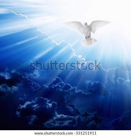 Holy spirit bird flies in blue sky, bright light shines from heaven, flying white dove - stock photo